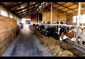 De koeiestal op 30 kilometer boer van Bemmel